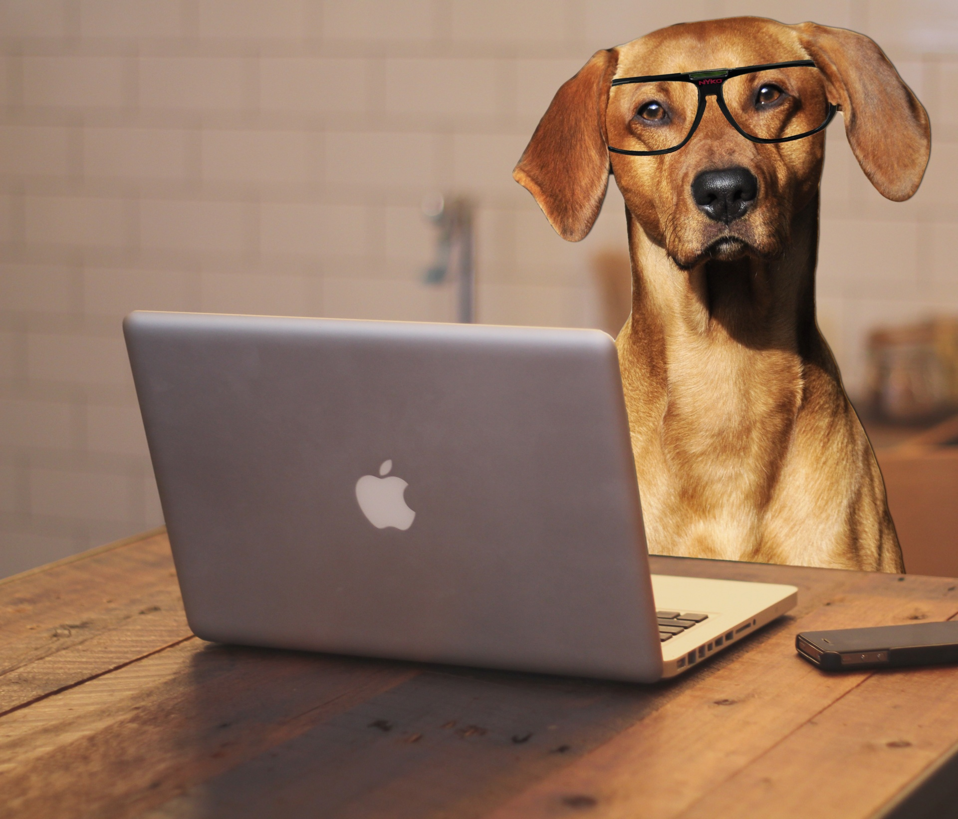 Dog wearing glasses and working on a laptop