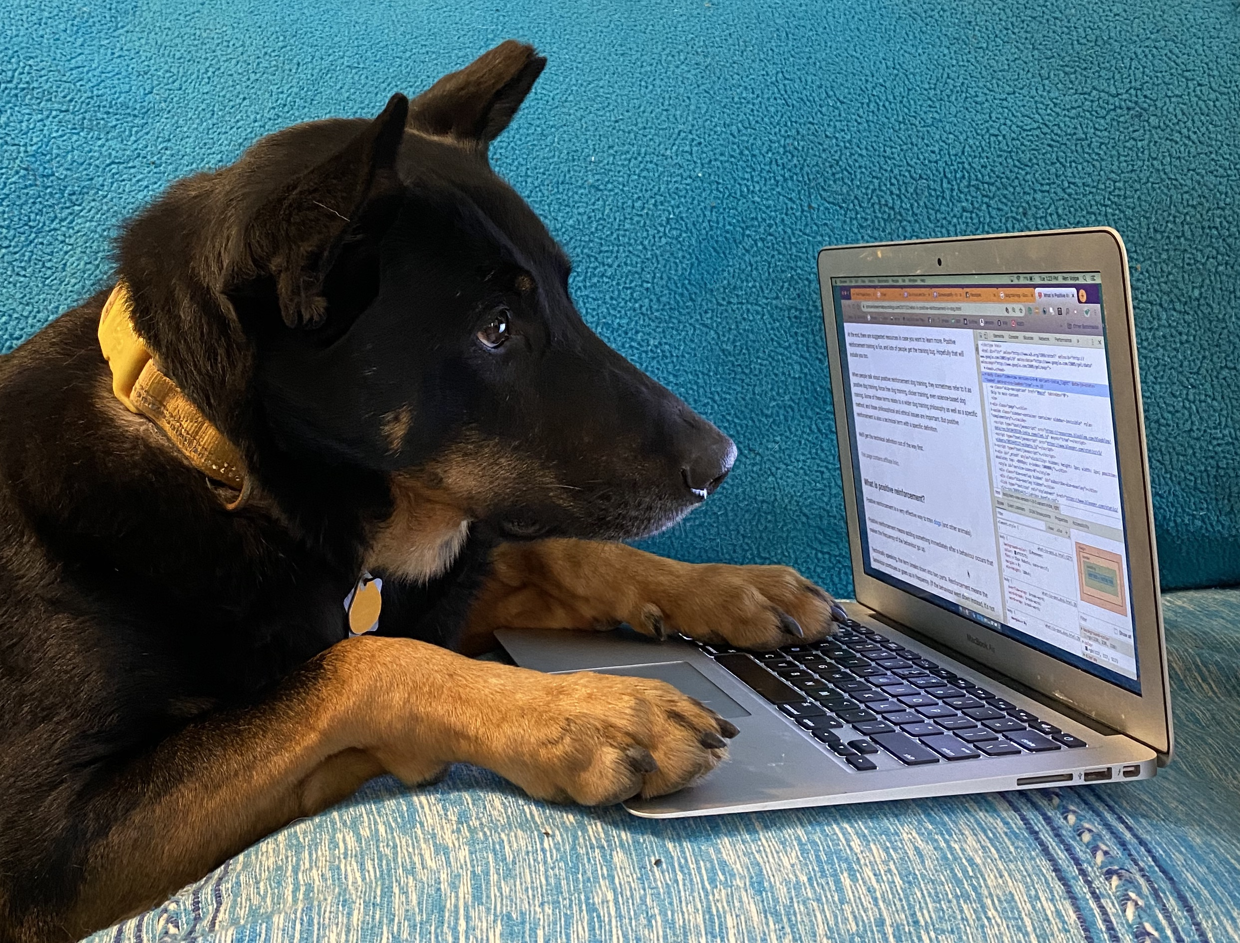 Black and brown dog working on a laptop